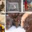 Крысиный рай: индийский храм, где поклоняются грызунам ❘ фото