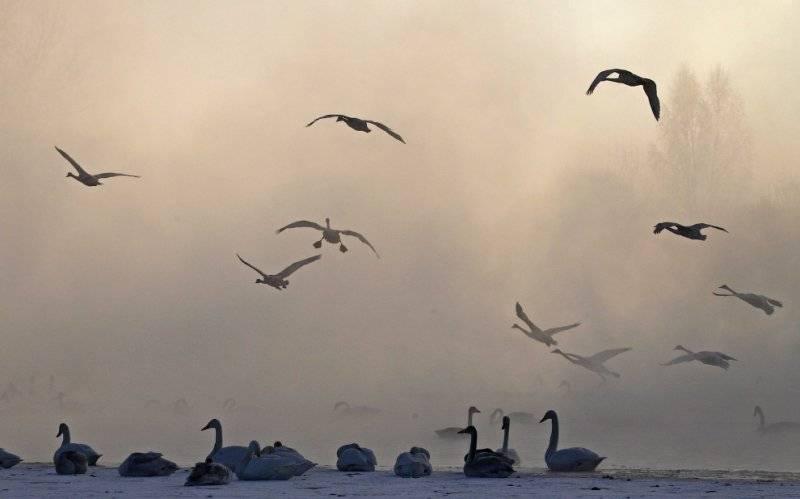 Лебединое озеро на Алтае